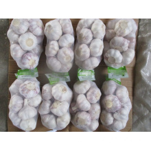 Fresh Normal White Garlic Size 5.0 Crop 2019