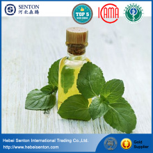 Peppermint Also Be Known as Mentha piperita