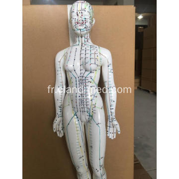MODELE ACUPUNCTURE MALE