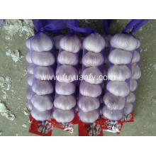 Chinese Professional for Normal White Garlic 5.0-5.5Cm Fresh Garlic new crop supply to Bhutan Exporter