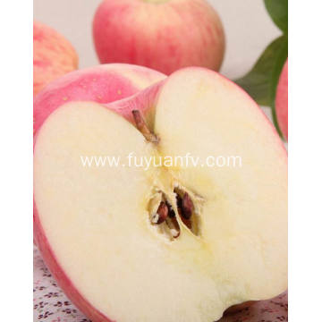 New Crop Fresh Cheap Qinguan apple (64-198)