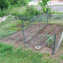 Rabbit Proof Fencing Around Vegetable Patch