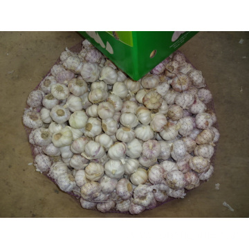 Normal White Garlic New Crop Fresh 2019