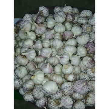 Wholesale 2019 Normal Garlic