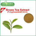 Natural Green Tea Txtract Powder