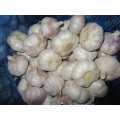 Normal White Garlic Has Purple Stripes In Skin