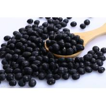 Small black beans for export
