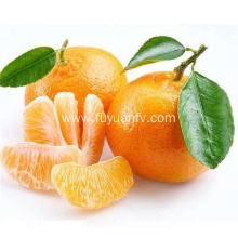 Juicy fruit sweet taste baby mandarin