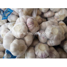 2019 new good quality normal white garlic