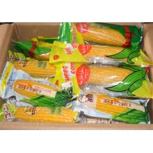 High Quality Good Tasty Sweet Corn