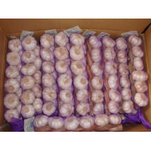 Different Weights Of Every Garlic Braids High Quality
