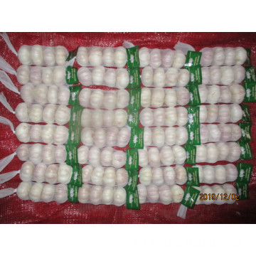 Hot Sale Normal White Garlic 2019