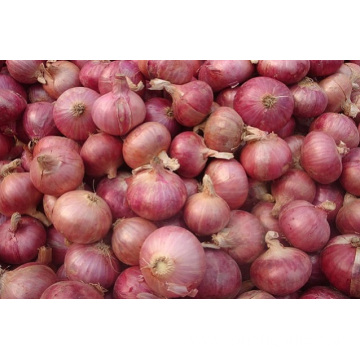 Sizes 5.0-7.0cm Fresh Red Onion