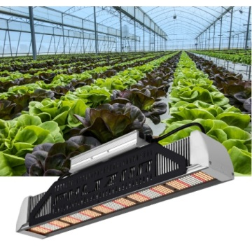 Waterpoof Phlizon LED Grow Light 240W EUA Estoque