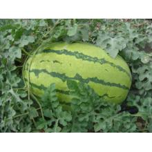 Best quality and factory for Watermelon Seeds F1 hybrid red watermelon seeds export to Vanuatu Manufacturers