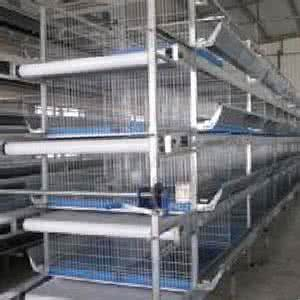 H Type Chicken Cages Equipment