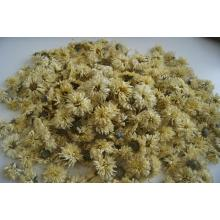 Top qualiy Dried Chinese Chrysanthemum