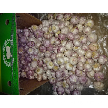 Normal White Garlic In Carton 2019