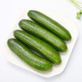 Vegetable Cucumber on sale