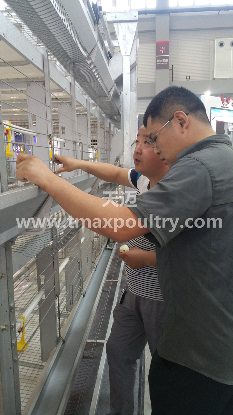H Type Broiler Cages Equipment