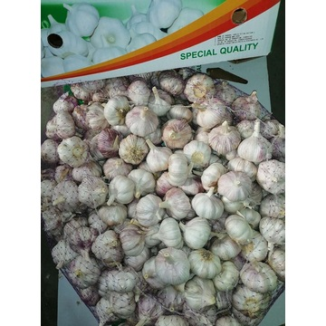 storing fresh new crop garlic