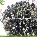 Factory Supply Dried Black Goji