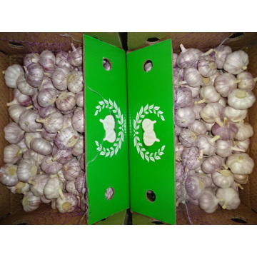 Normal White Garlic New Crop With Best Quality