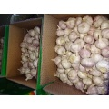 Hot  Sale Normal White Garlic