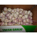 New Fresh Garlic High Quality Best Price