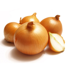 Onions of the Best Variety
