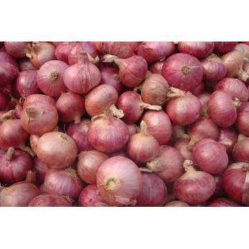 Shandong Best Quality Red Onion