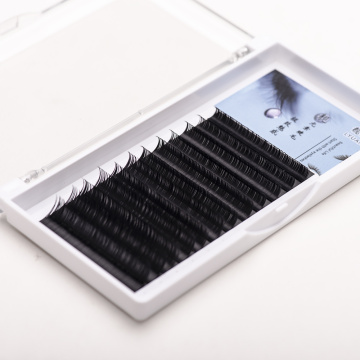 Korean Individual Fans Lashes Eyelashes Extension