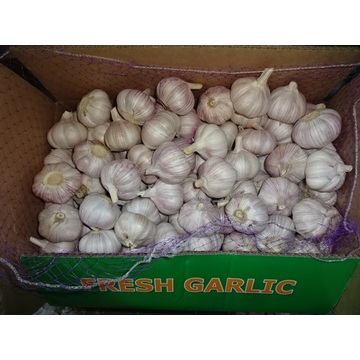 Hot Sale Normal White Garlic Fresh