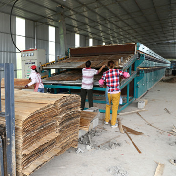 Eucalyptus Core Veneer Drying Machine for Sale