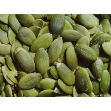 Organic Kernels Dried from Ukraine Pumpkin seed