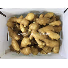 Fresh ginger for Middle East market