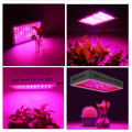 O le maualuga o le COB LED Grow Lights mo Microgreens
