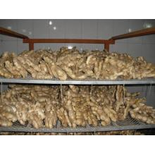 Air dried Ginger from Weifang