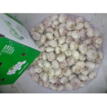 Normal Fresh  White Garlic For Export