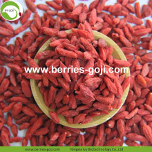 New Crop Factory Supply Dried Ningxia Goji Berry