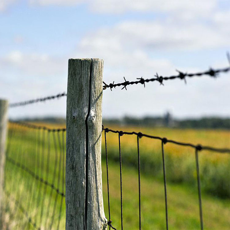 barbed wire 02