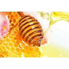 Good Quality for 100% Pure Honey Healthy original pure Bee sunflower honey export to United Arab Emirates Importers