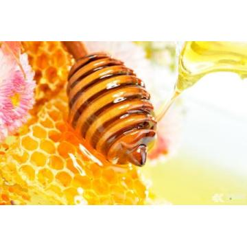 Healthy original pure Bee sunflower honey