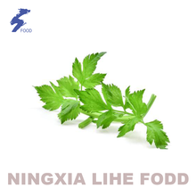 100% natural Parsley leaf granula dried