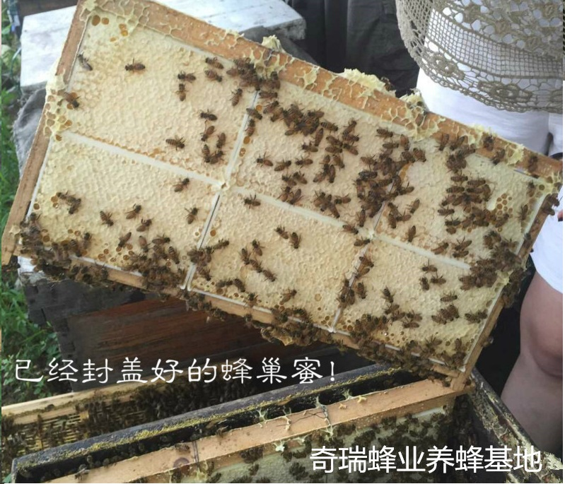 buy bulk high quality organic bee honey