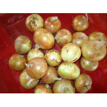 Shandong Best Quality Yellow Onion