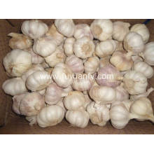 High Quality for Natural Fresh White Garlic Normal white garlic 6.0-6.5cm export to Morocco Exporter