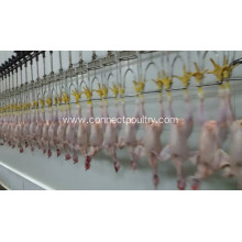 Hot Sale for Chicken Defeather Machine chicken overhead hanging line export to South Africa Manufacturer