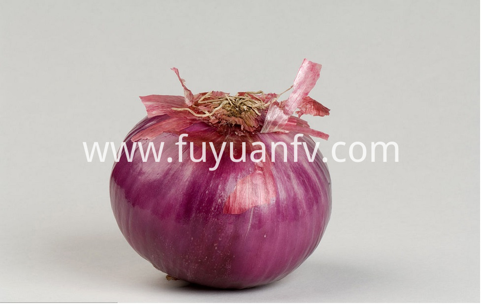 Red Onion 11