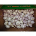 Normal White Garlic In Carton New Crop